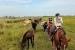 caballo llanos 12 (Copier)