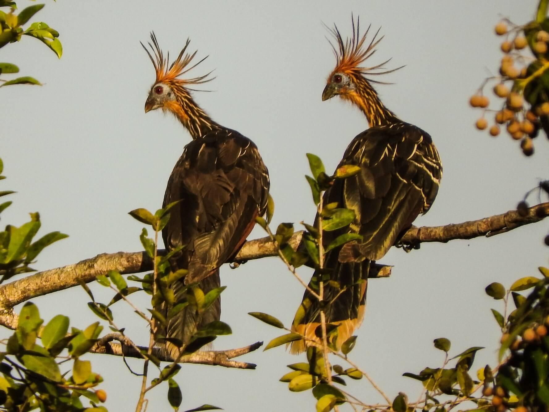 Route des Grands Plaines - Oiseaux