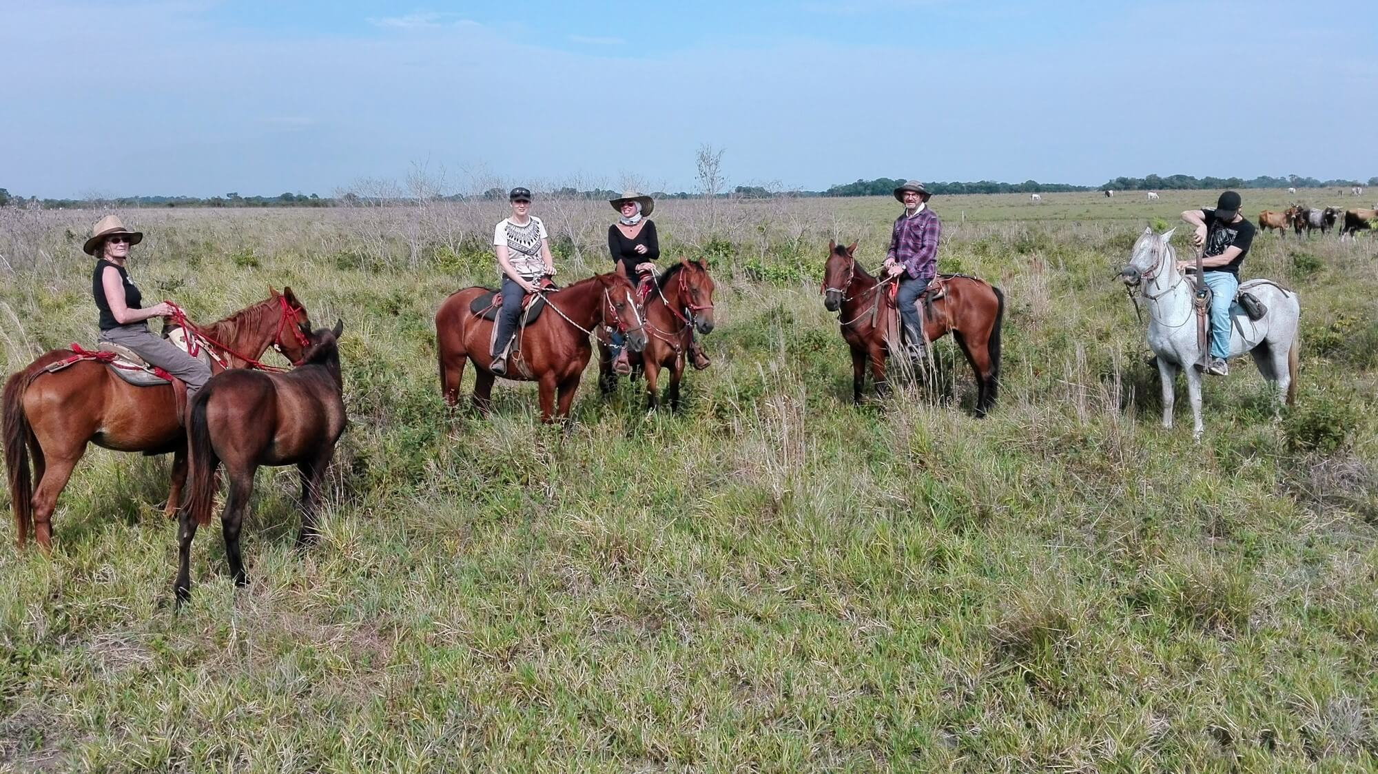 Route des Grands Plaines - caballo-llanos