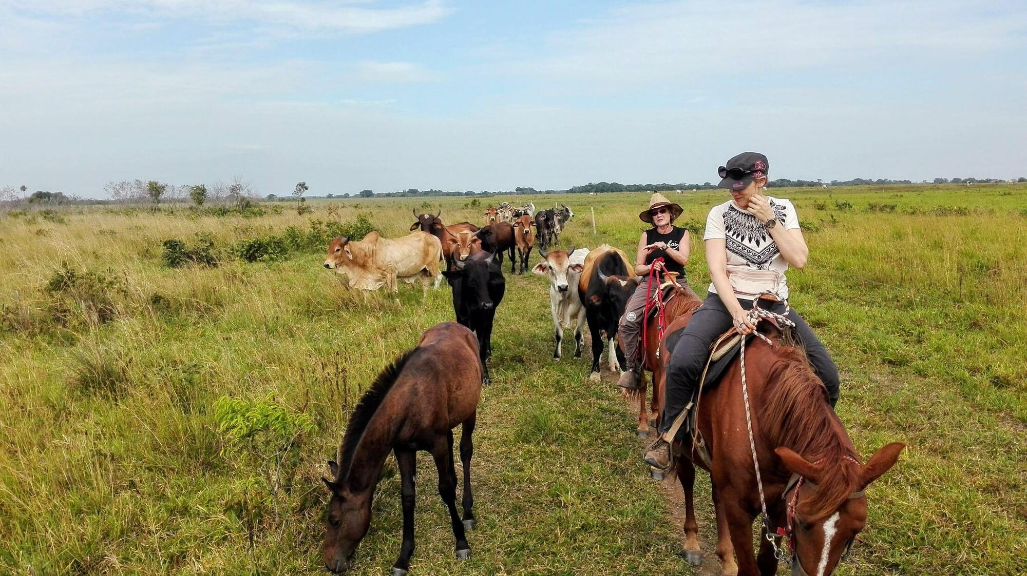 Route des Grands Plaines - caballo-llanos2