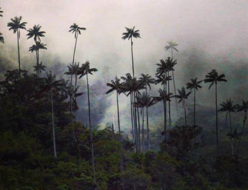 La biodiversité Colombienne