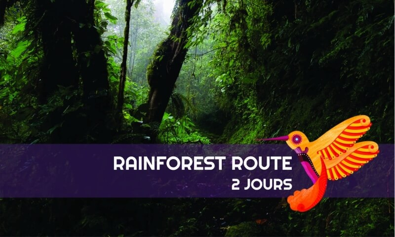 Tour Rainforest Route