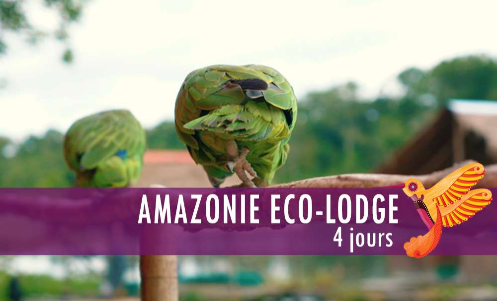 Vignette - Amazonie Eco-lodge