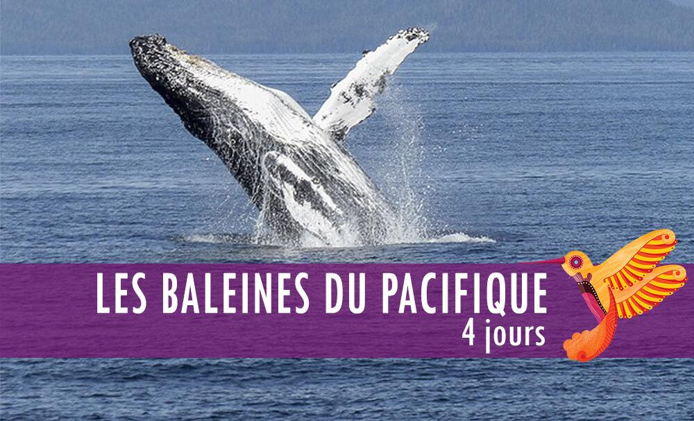 Vignette - Les baleines du pacifique